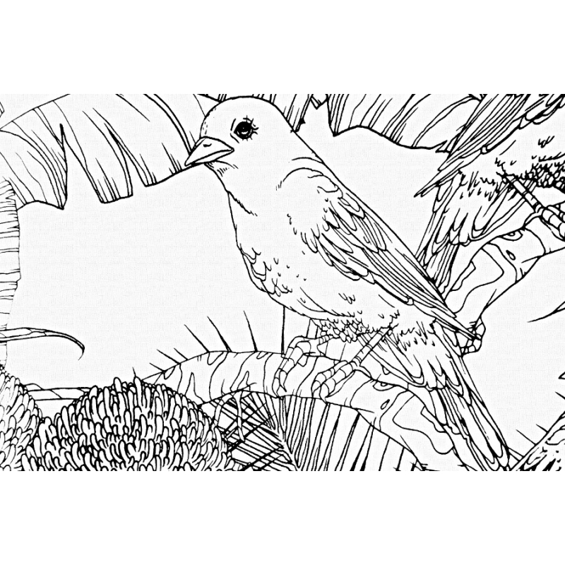 Coloriage adulte oiseaux cacatoes en 20 x 20cm les papiers de lucas - Coloriage therapie ...