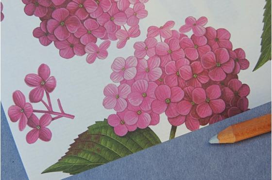 Papier décoratif Rossi1931© - Hortensias
