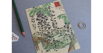 Glycine Hiroshige