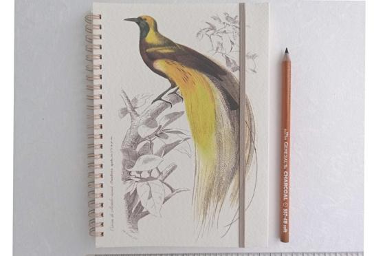 Notebook A5 Oiseaux exotiques